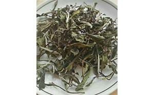 白茶是春茶好喝还是秋茶好喝?