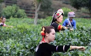 普洱茶多元化、回归理性的发展的阶段
