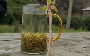 信阳毛尖茶有什么特点?