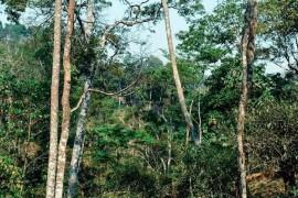 攸乐山的龙帕古树茶有什么特点?