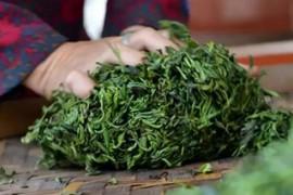 普洱茶生茶与熟茶有什么区别?