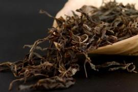 古树茶属于什么茶?古树普洱茶的口感特点